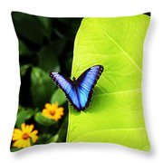 Blue Morpho Butterfly Throw Pillow