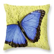 Blue Morpho Butterfly Throw Pillow by Richard J Thompson