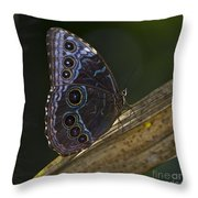 Blue Morpho.. Throw Pillow