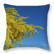 Blue Palo Verde Tree-signed-#2343 Throw Pillow