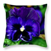 Blue Pansy Flower Throw Pillow