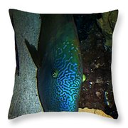 Blue Parrot Fish Throw Pillow