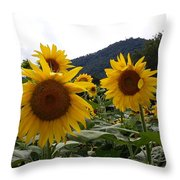 Blue Ridge Sunflowers  Throw Pillow