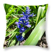 Blue Sage Throw Pillow