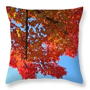 Blue Sky Red Autumn Leaves Sunlit Orange Baslee Troutman  Throw Pillow