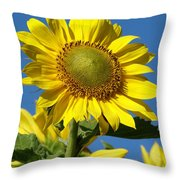 Blue Sky Sunflower Day Throw Pillow