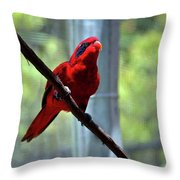Blue-streaked Lory Throw Pillow