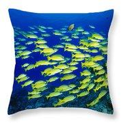 Blue Stripe Snapper Throw Pillow
