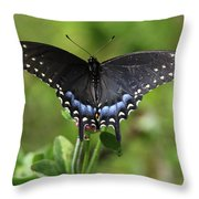 Blue Tailed Black Butterfly Throw Pillow