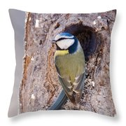 Blue Tit Leaving Nest Throw Pillow by Cliff Norton