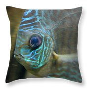 Blue Tropical Fish Throw Pillow