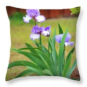 Blue Violet Irises  Throw Pillow