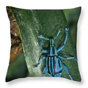 Blue Weevel Throw Pillow