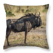 Blue Wildebeest Standing On Savannah Staring Ahead Throw Pillow