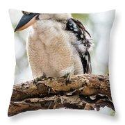 Blue-winged Kookaburra Throw Pillow