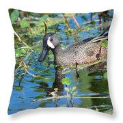 Blue-winged Teal Throw Pillow