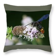 Blue-winged Wasp On Mint Throw Pillow