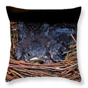 Bluebird Babies Dreaming Of Flight Throw Pillow