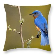 Bluebird Bliss Throw Pillow