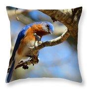 Bluebird Curiousity Throw Pillow