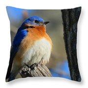 Bluebird Evening Throw Pillow