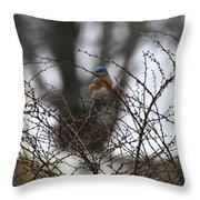 Bluebird In Briars Throw Pillow