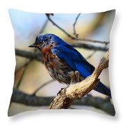 Bluebird In May Throw Pillow