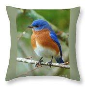 Bluebird On Branch Throw Pillow