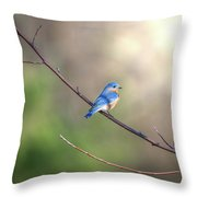 Bluebird Perched On A Tree Branch In The Sunlight Throw Pillow