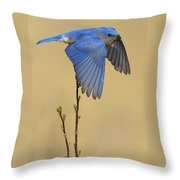 Bluebird Takes Flight Throw Pillow