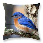 Bluebird Vibrance Throw Pillow