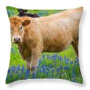 Bluebonnet Cow Throw Pillow