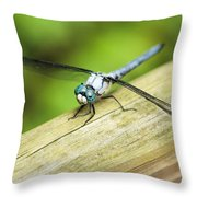 Blued Eyed Darner Throw Pillow