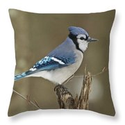 Bluejay 012 Throw Pillow