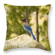Bluejay Pondering Throw Pillow