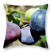 Blues In The Florida Berries Throw Pillow