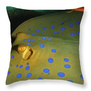 Bluespotted Ribbontail Ray  Throw Pillow
