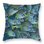 Bluestripe Snapper Throw Pillow