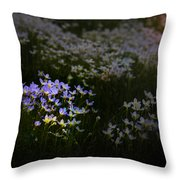 Bluets In Momentary Light Throw Pillow