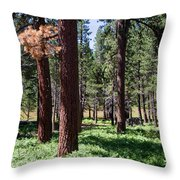 Bluff Lake Ca Fern Forest 2 Throw Pillow