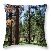 Bluff Lake Ca Fern Forest 3 Throw Pillow