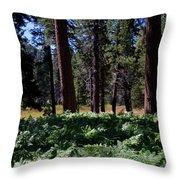 Bluff Lake Ca Fern Forest 4 Throw Pillow