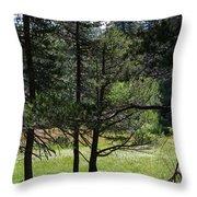 Bluff Lake Ca Through The Trees 8 Throw Pillow
