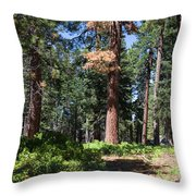 Bluff Lake Forest 6 Throw Pillow