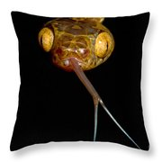 Blunthead Tree Snake Throw Pillow