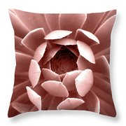 Blush Pink Succulent Plant, Cactus Close Up Throw Pillow