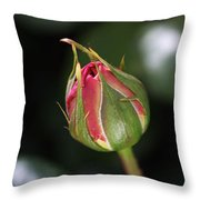 Blushing Rose Bud Throw Pillow