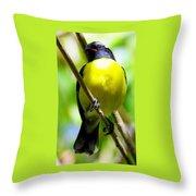Boastful Bird Throw Pillow