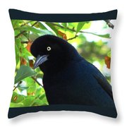 Boat Tailed Grackle Close Up Throw Pillow