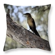 Boat - Tailed Grackle  Throw Pillow
